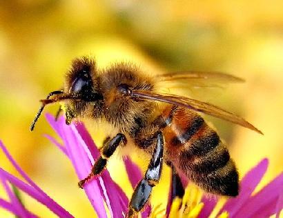 ミツバチの画像 p1_6
